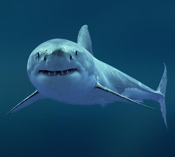 Акулий жир для лица кремы мази и маски от морщин польза и вред отзывы